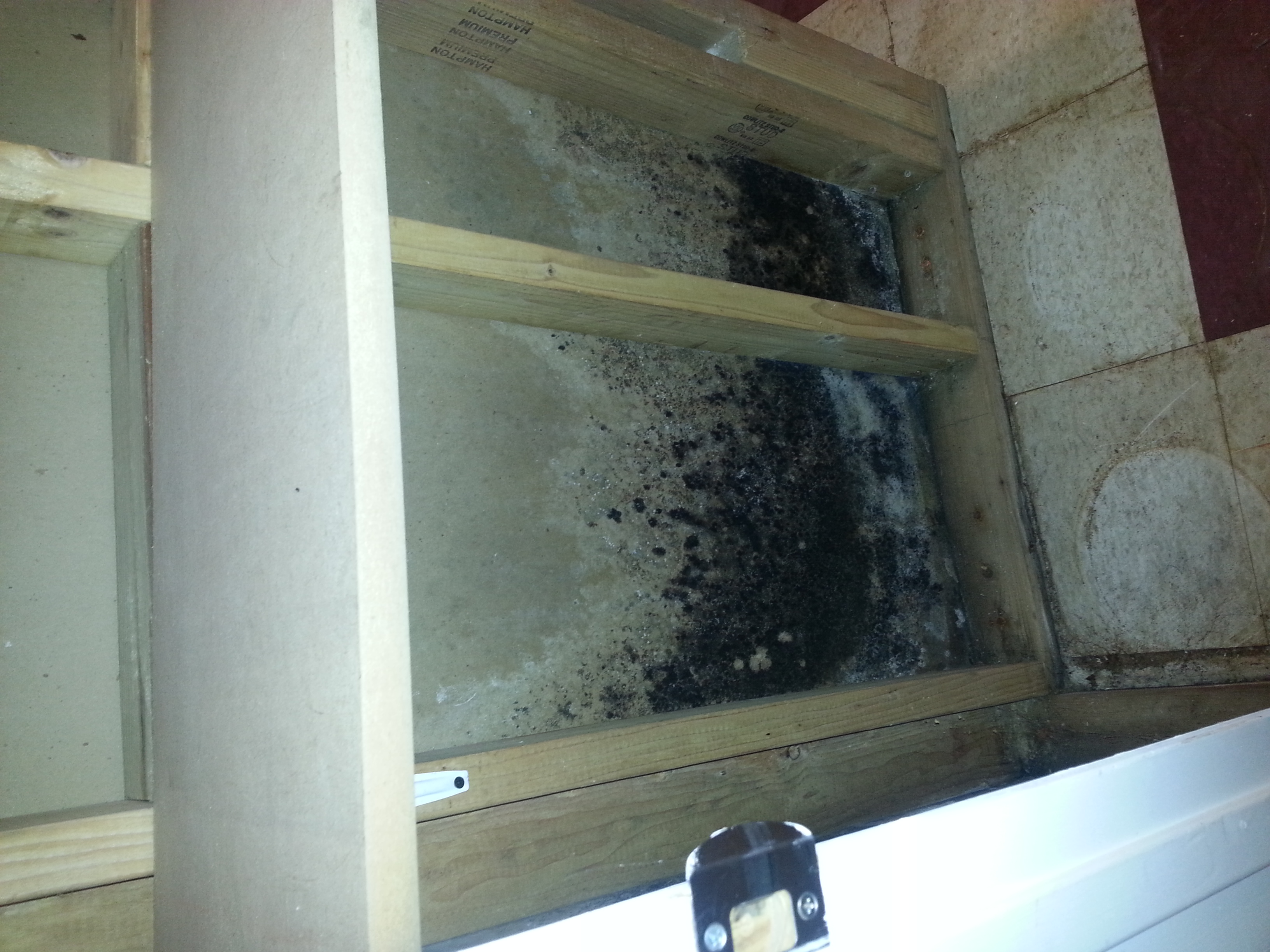 High Humidity Leads To Mold Damage