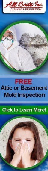 Mold Inspection tall