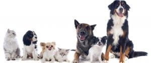 pet odor and stain removal laconia