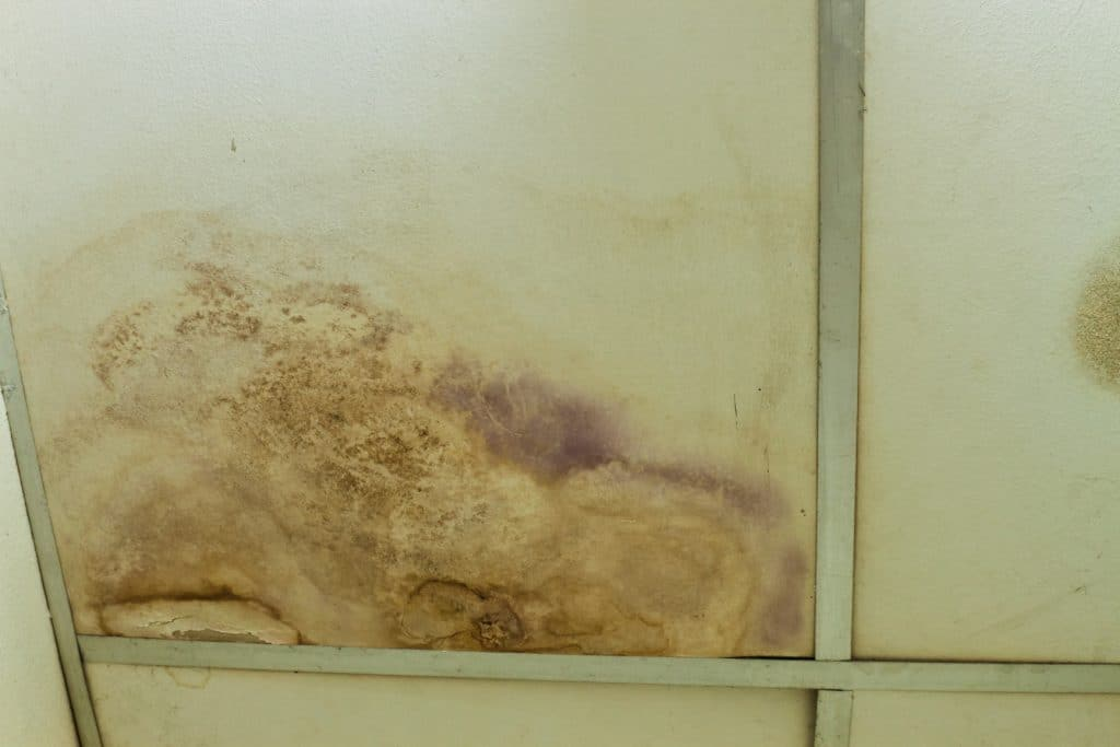 Mold Removal Gilford, Mold Damage Gilford, Mold Damage Removal Gilford