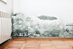 mold damage laconia, mold removal laconia, mold cleanup laconia